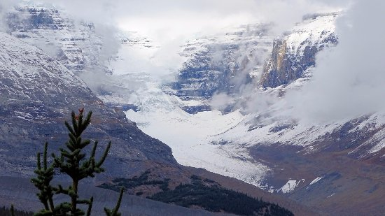 Wilcox Pass: View of Columbia Icefields from the trail