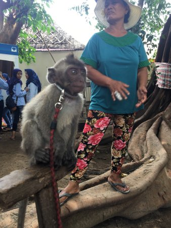 Tanjung Benoa, Endonezya: photo2.jpg