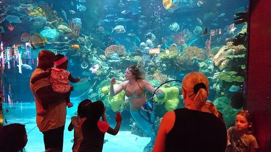 Silverton Aquarium Las Vegas Lo Que Se Debe Saber Antes De Viajar Tripadvisor