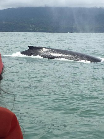 Uvita, Costa Rica: Whale watching at the Whale's Tail in Costa Rica