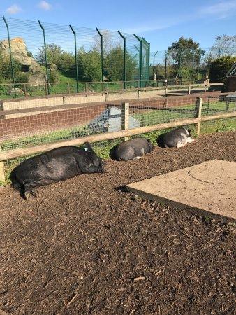 Isle of Wight Zoo: photo6.jpg
