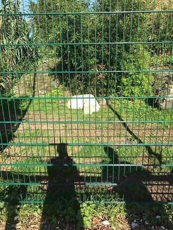 Isle of Wight Zoo: photo7.jpg
