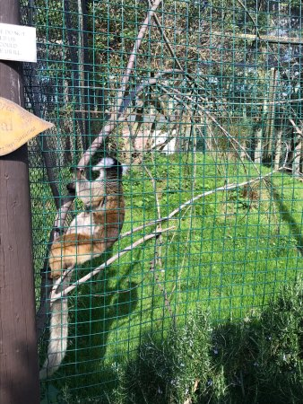 Isle of Wight Zoo: photo9.jpg