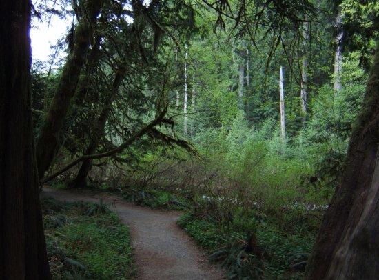 Πορτ Άλμπερνι, Καναδάς: Cathedral Trail