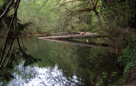 Port Alberni, Canada: Cathedral Trail