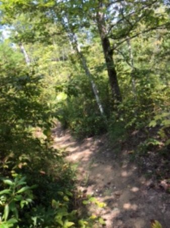 Pickett CCC Memorial State Park: One of the trails