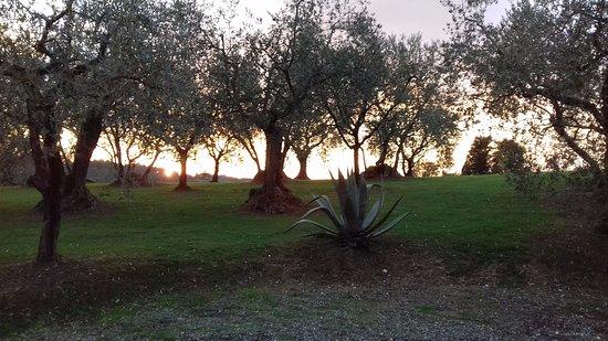 Capannori, Italia: Tramonto a corte benedetto