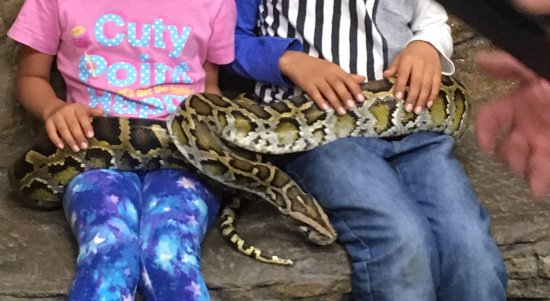 Fountain Valley, Kaliforniya: Burmese Pythonとの撮影