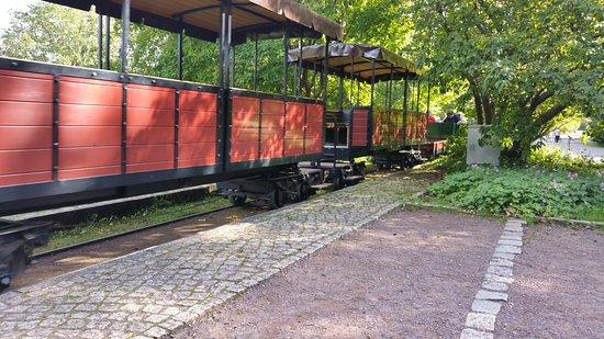 Lila Grunkohl Und Eine Pompon Dahlie Picture Of Britzer Garten Berlin Tripadvisor