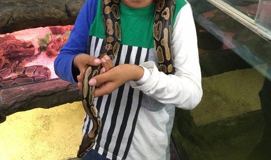 Fountain Valley, CA: 首の周りにかけてもらった小さめの蛇