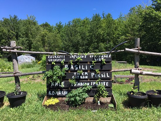 Ormstown, Kanada: Inspired by the Incredible edible, we have a common herbs garden for everyone.