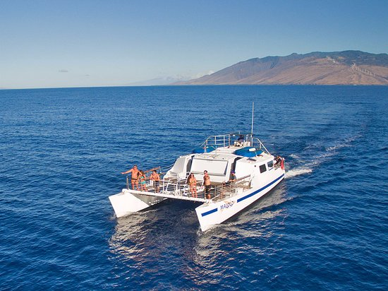 Wailuku, HI: Whale Watch Aboard the Malolo