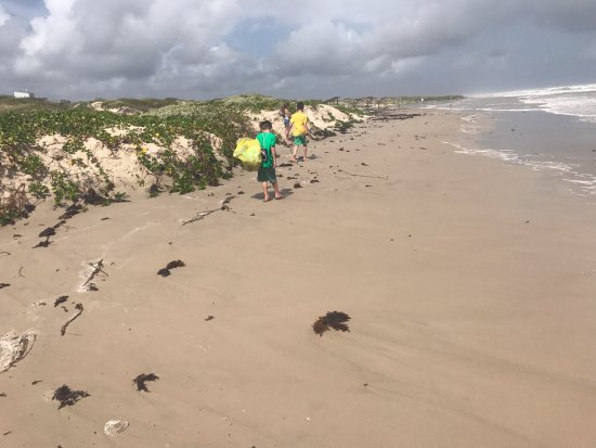 Padre Island National Seashore: we just walked up and down the beach and it was lovely