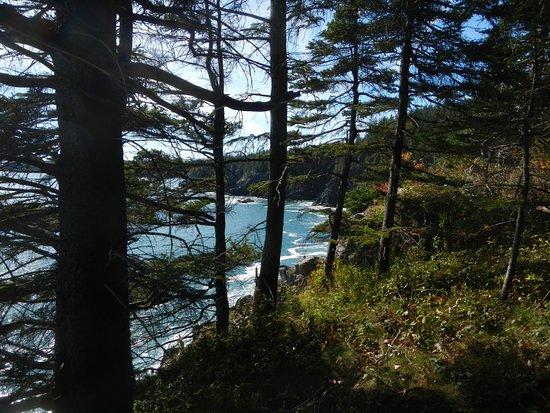 Machias, ME: View of trail along coast