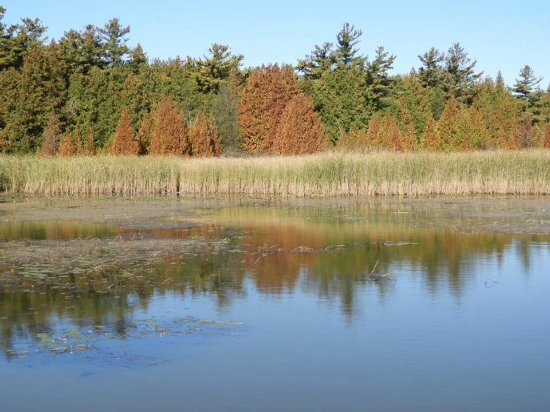 Brighton, Canadá: On the Marsh walk at Presquile Parh
