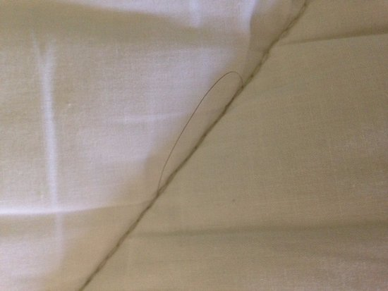 Whiteville, NC: Hair on the mattress pad beneath the fitted sheet