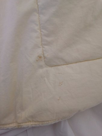 Whiteville, NC: Stained comforter