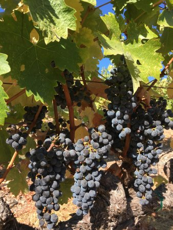 William Hill Estate Winery: photo0.jpg