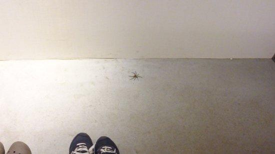 熊毛郡南種子町, 鹿児島県, とにかく蜘蛛がたくさんいます。