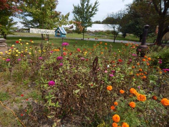 Middletown, VA: wildflowers