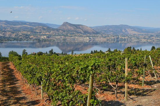 Penticton, Canada: Lang Winery (stunning views)