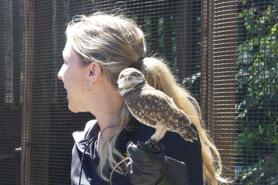 Eugene, OR: Borrow owl