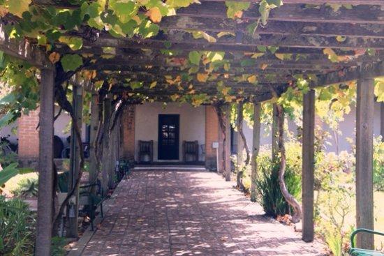 Mission San Luis Obispo de Tolosa: Grape vines over the old pergola leading  to the - Grape Vines Over The Old Pergola Leading To The Gift Shop And