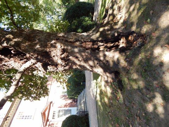 Charles City, VA: lightning tree