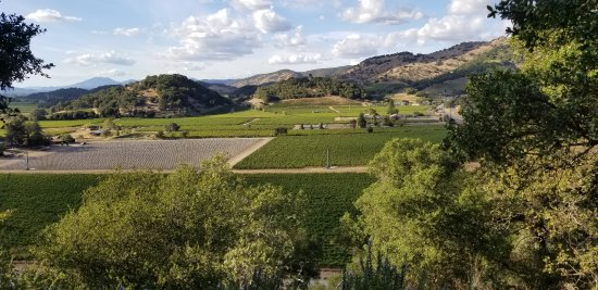 Napa Valley Wine Country Tours: 20170921_170849_large.jpg