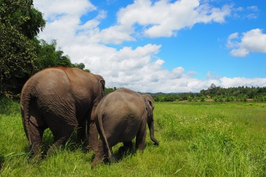 Lanna Kingdom Elephant Sanctuary