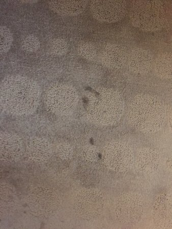 Pullman Melbourne Albert Park: There wasn't just one or two stains on this carpet......