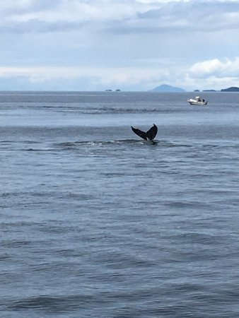 Prince Rupert Adventure Tours: Humpback whale