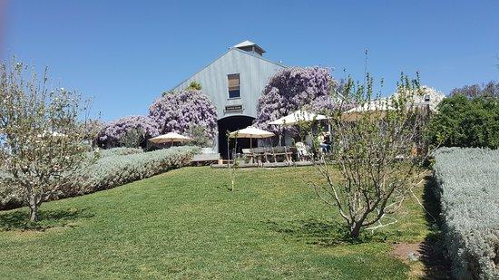 Mudgee, Australien: Wine tasting & sales shed