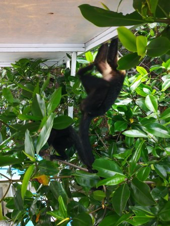 Quepos, Costa Rica : hang in there