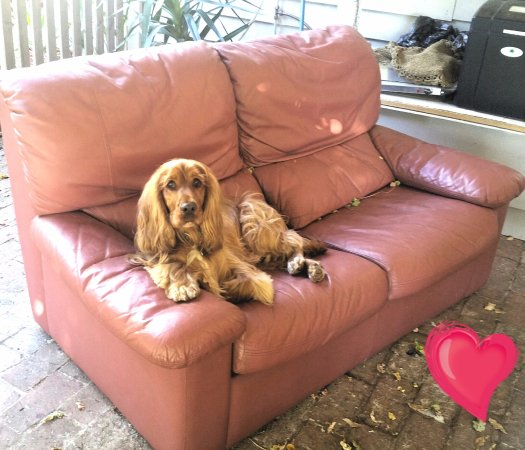 Rutherglen, Australia: very spoilt guest enjoying the couch
