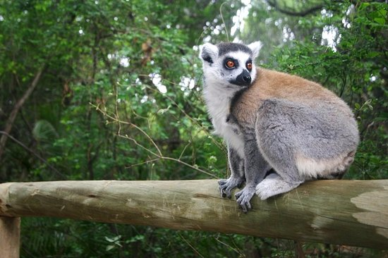 Hartbeespoort, Güney Afrika: Bush Babies Monkey Sanctuary