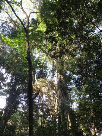 Bwanje, Malaui: Ntchisi forest