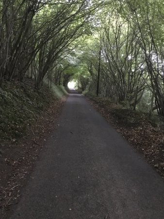 Wye, UK: Another of the pathways on the walk
