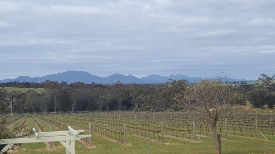 Arcadia Wines