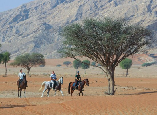 Mileiha, Zjednoczone Emiraty Arabskie: Desert Horseback Riding Expeditions