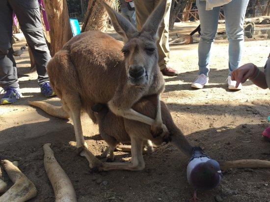 Куррумбин, Австралия: photo4.jpg