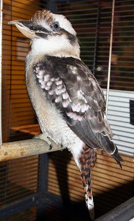 Bolton, MA: Crazy Kukabura at Animal Adventures