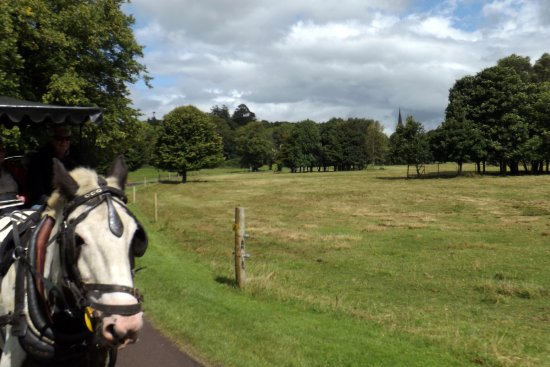 Tripadvisor Reviews Jaunting Cars Ireland