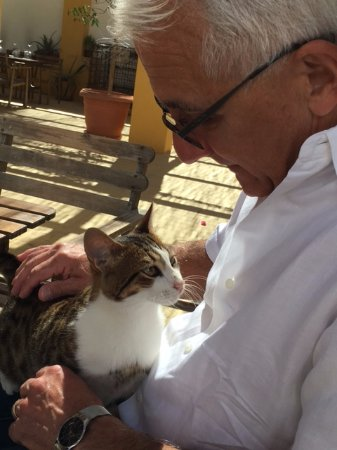 Gaia Winery : The winery kitty