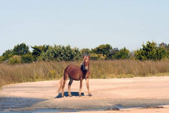 Beaufort, NC: Shackleford Banks like they were posing for us.