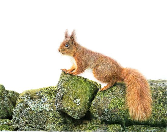 Hawes, UK: Yorkshire's Redheaded Wonder Supporting Red squirrel conservation within the Yorkshire Dales