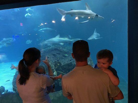 North Carolina Aquarium on Roanoke Island (Manteo) - All ...