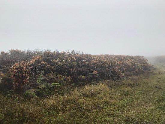 San Cristobal, Ecuador: Niebla