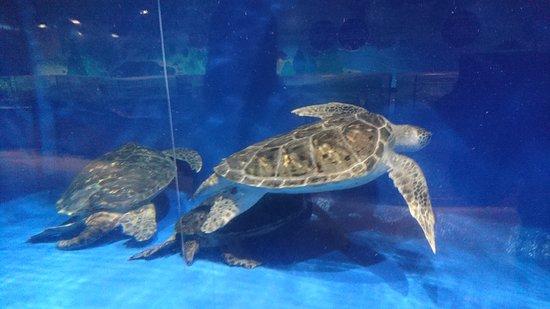 Aomori Asamushi Aquarium: DSC_1140_large.jpg