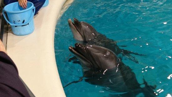 Aomori Asamushi Aquarium: DSC_1180_large.jpg